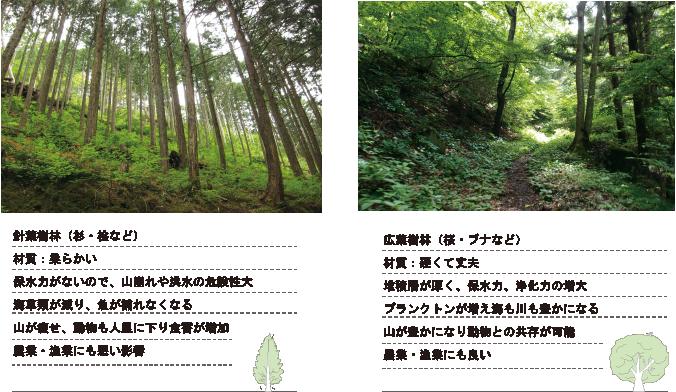 針葉樹と広葉樹の違い
