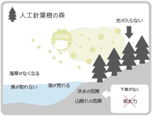 人工針葉樹の森